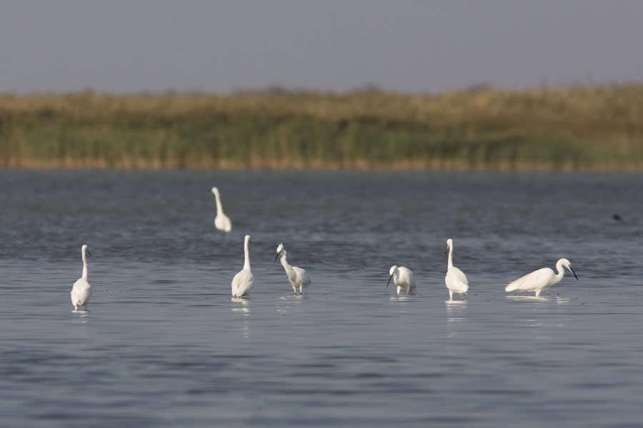 ханское озеро картинки язычки получились хрустящие